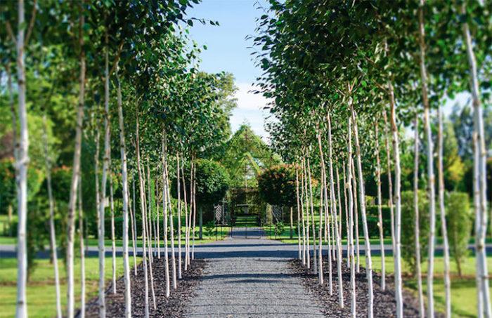 chiesa-fatta-di-alberi-nuova-zelanda-barry-cox-4