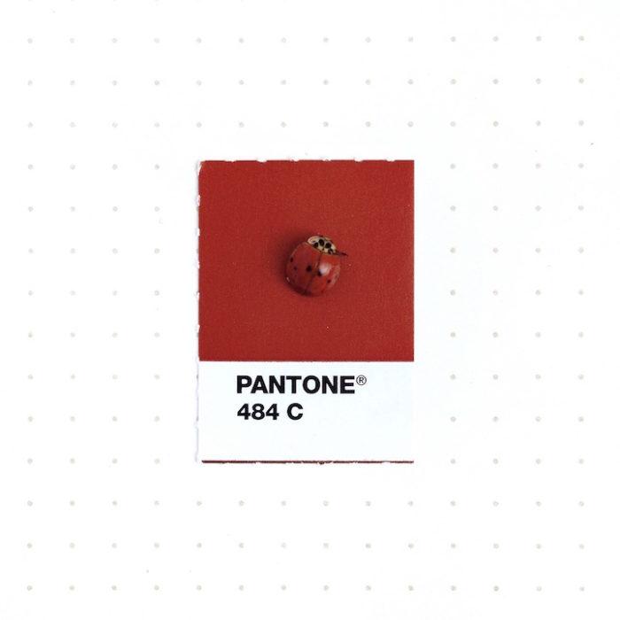 designer-associa-oggetti-pantoni-inka-mathew-12