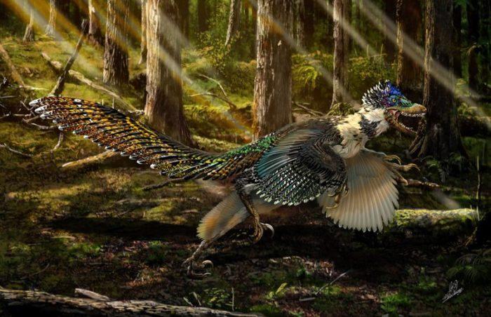 dinosauro-alato-scoperto-in-cina-antenato-velociraptor-3