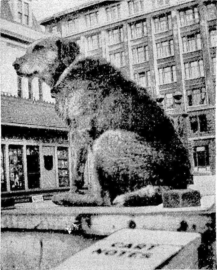 foto-cani-giganti-illusione-ottica-03