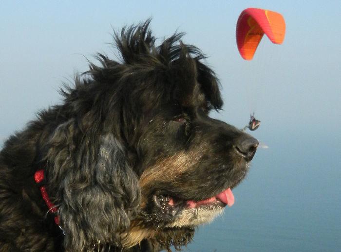 foto-cani-giganti-illusione-ottica-04