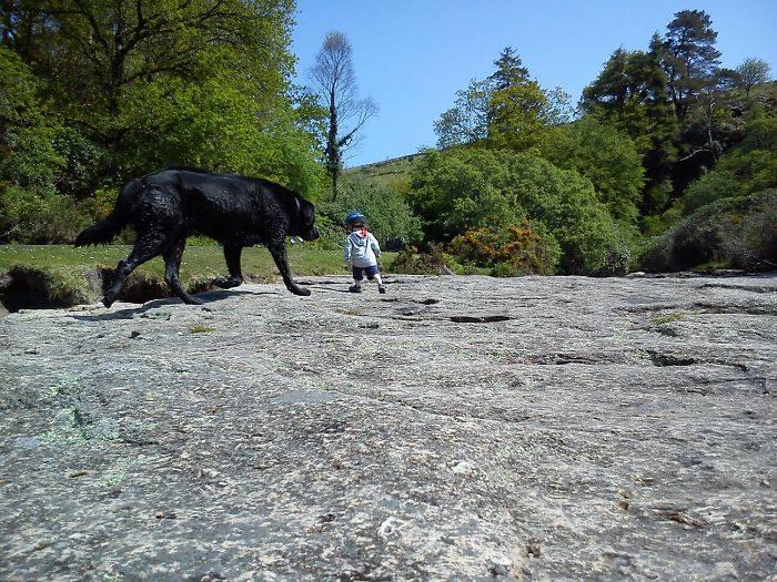 foto-cani-giganti-illusione-ottica-05