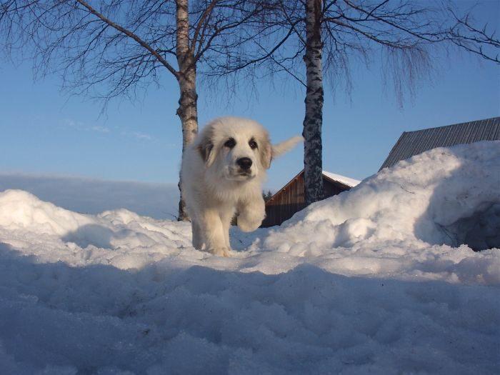 foto-cani-giganti-illusione-ottica-11