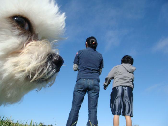 foto-cani-giganti-illusione-ottica-12