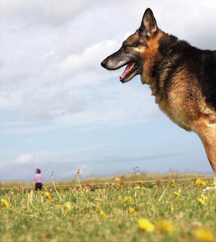 foto-cani-giganti-illusione-ottica-13