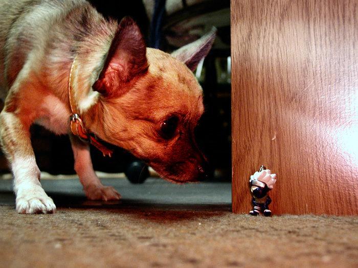 foto-cani-giganti-illusione-ottica-16