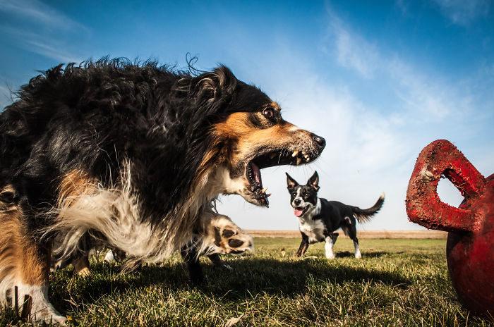 foto-cani-giganti-illusione-ottica-17