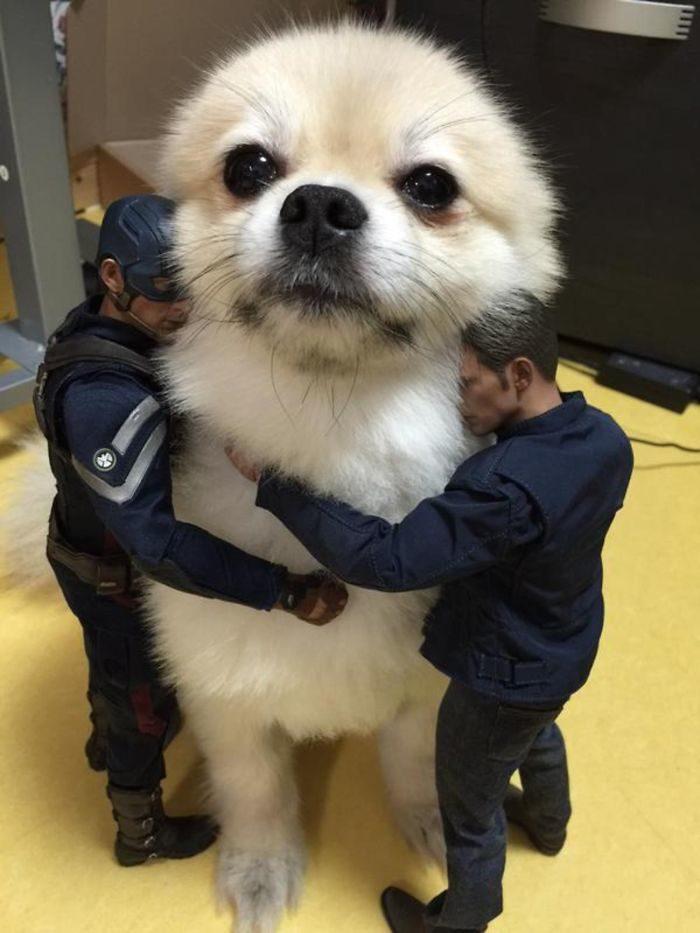 foto-cani-giganti-illusione-ottica-19