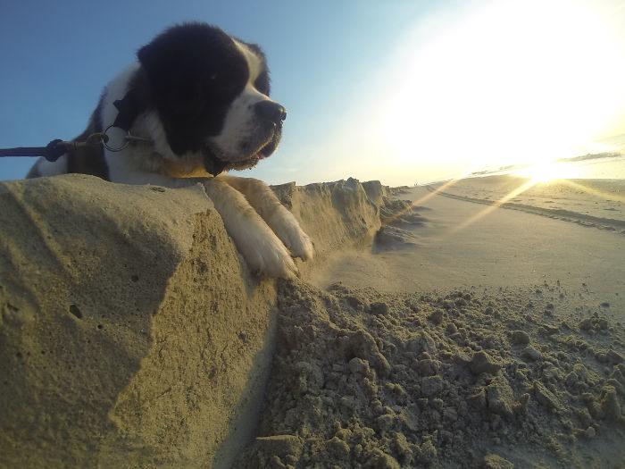 foto-cani-giganti-illusione-ottica-21