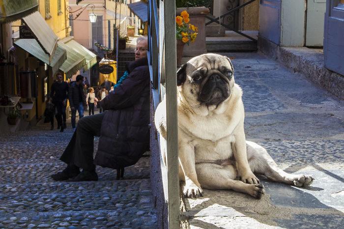 foto-cani-giganti-illusione-ottica-22
