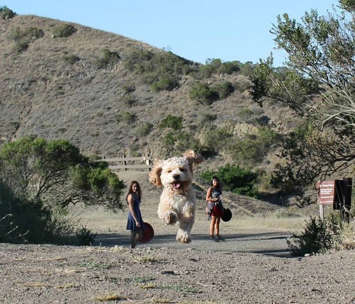 foto-cani-giganti-illusione-ottica-23