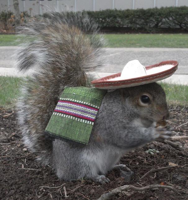 foto-scoiattoli-vestiti-costume-sneezy-mary-krupa-01