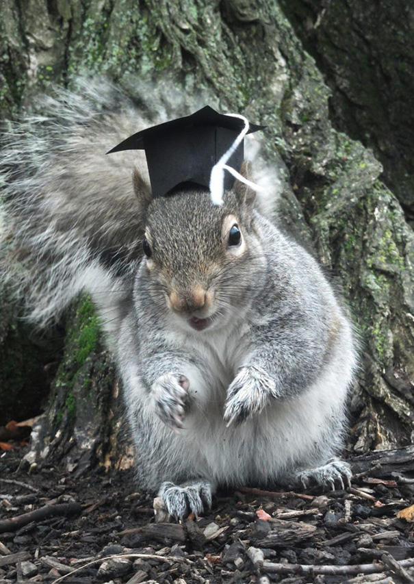 foto-scoiattoli-vestiti-costume-sneezy-mary-krupa-02