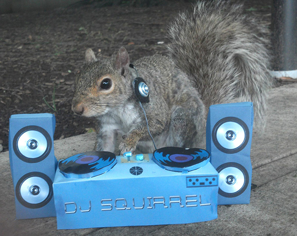 foto-scoiattoli-vestiti-costume-sneezy-mary-krupa-04