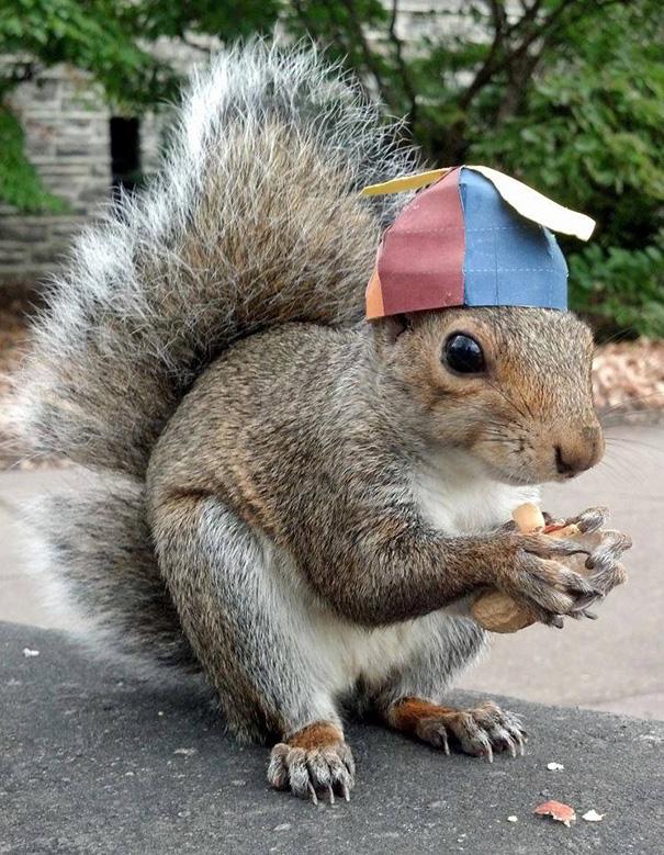 foto-scoiattoli-vestiti-costume-sneezy-mary-krupa-06
