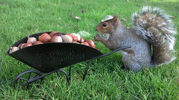foto-scoiattoli-vestiti-costume-sneezy-mary-krupa-07