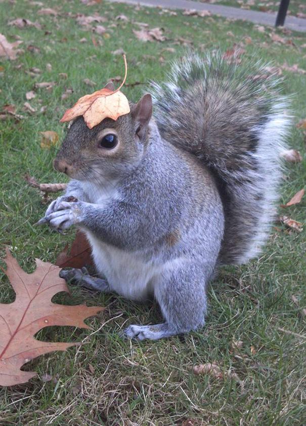foto-scoiattoli-vestiti-costume-sneezy-mary-krupa-08