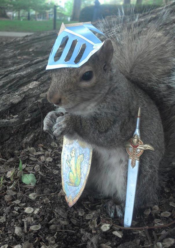 foto-scoiattoli-vestiti-costume-sneezy-mary-krupa-09