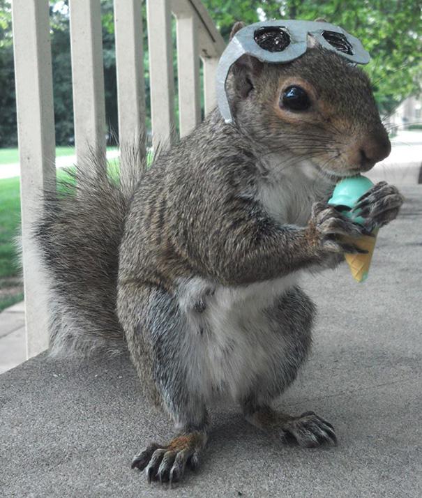 foto-scoiattoli-vestiti-costume-sneezy-mary-krupa-11
