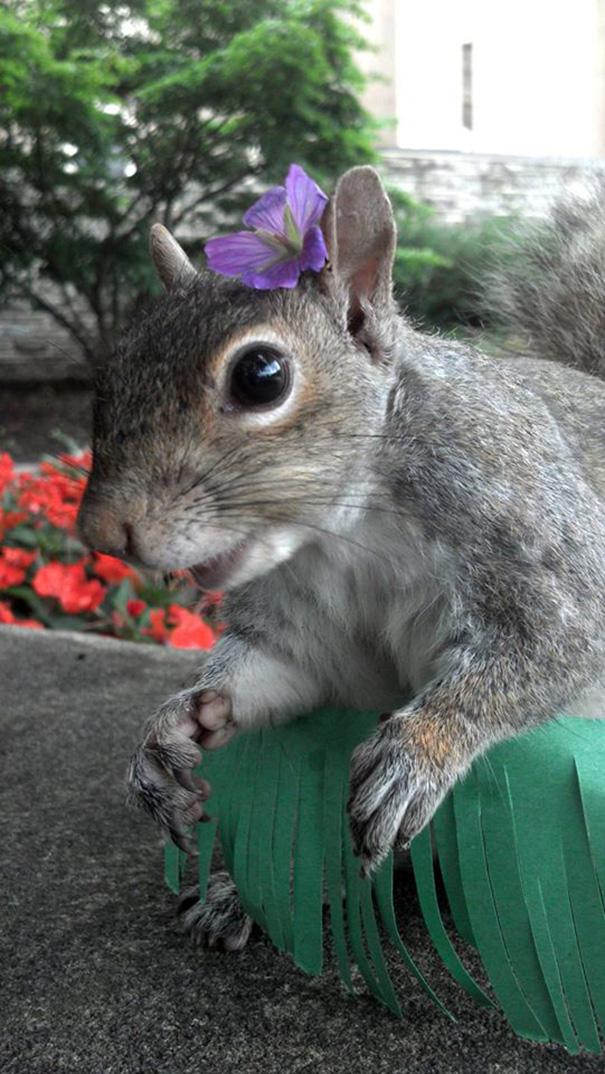 foto-scoiattoli-vestiti-costume-sneezy-mary-krupa-12