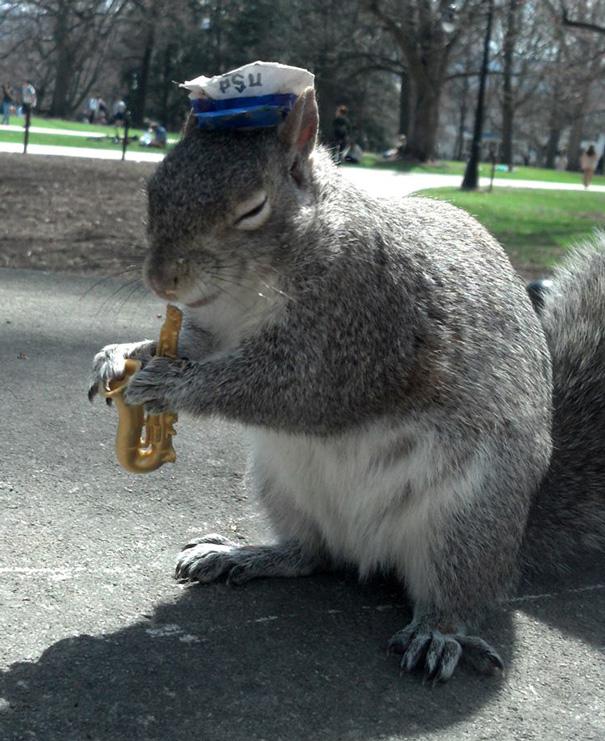 foto-scoiattoli-vestiti-costume-sneezy-mary-krupa-13
