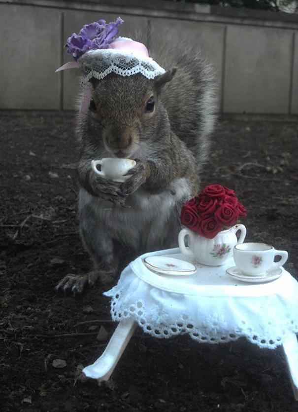 foto-scoiattoli-vestiti-costume-sneezy-mary-krupa-14