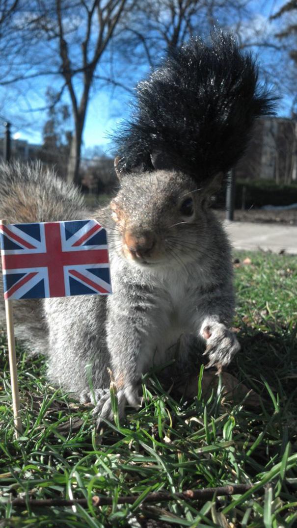 foto-scoiattoli-vestiti-costume-sneezy-mary-krupa-15