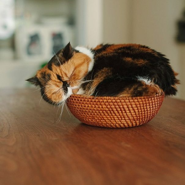 gattini-addormentati-ovunque-03