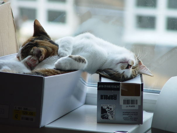 gattini-addormentati-ovunque-05