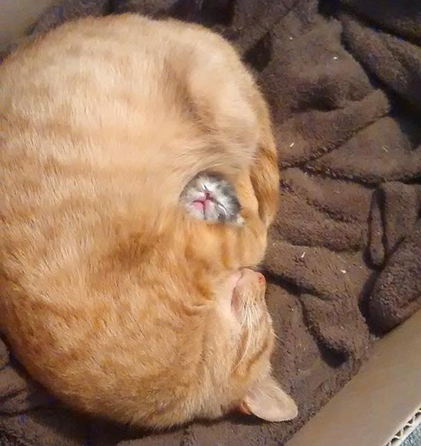 gattini-addormentati-ovunque-07