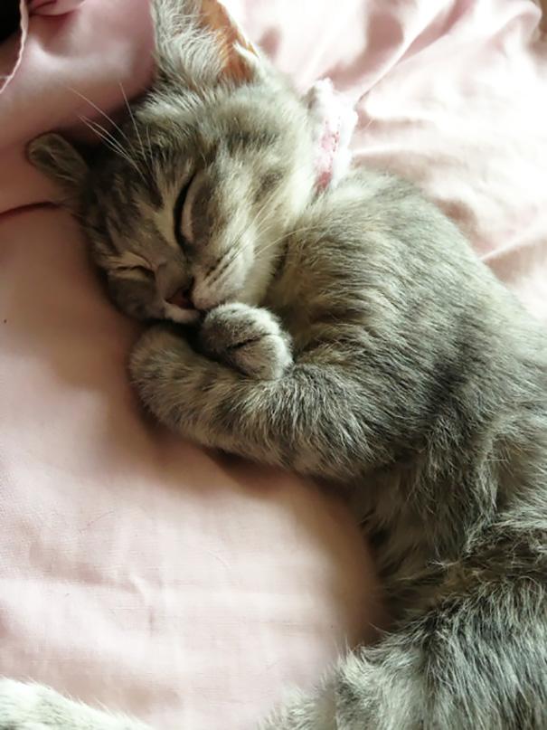 gattini-addormentati-ovunque-08