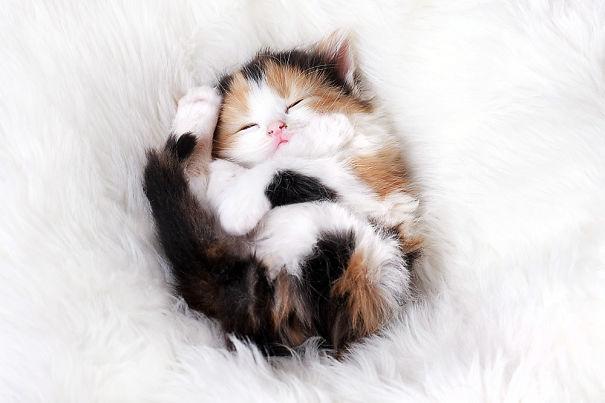 gattini-addormentati-ovunque-09