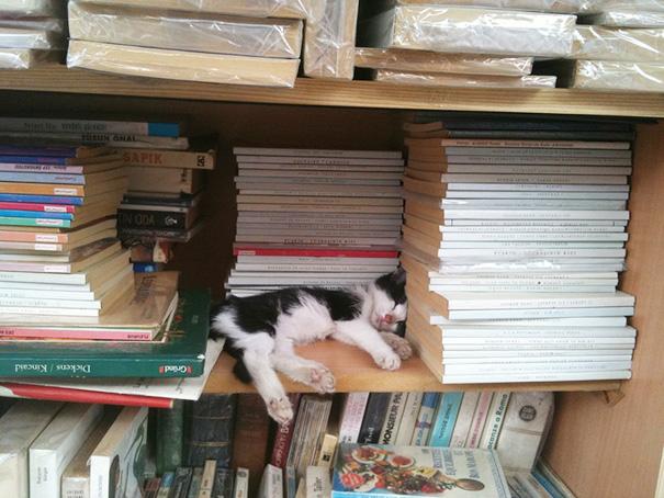 gattini-addormentati-ovunque-10