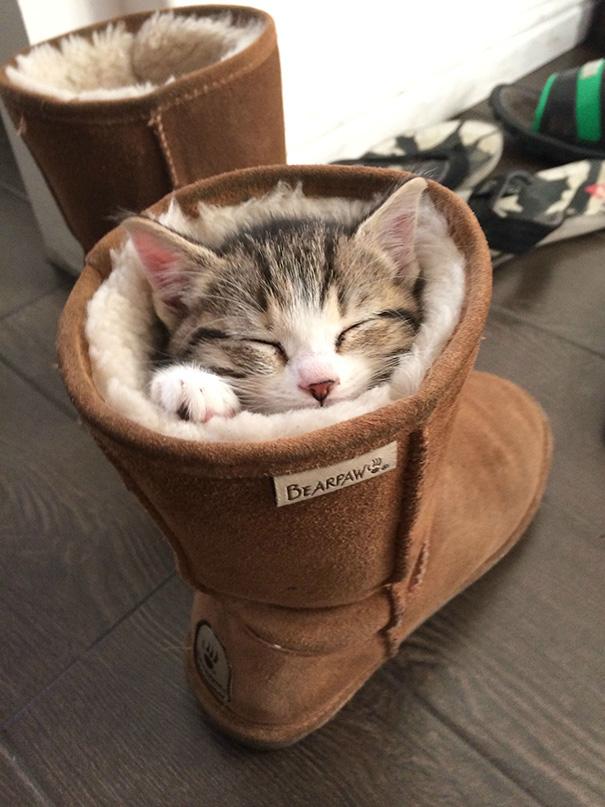 gattini-addormentati-ovunque-11