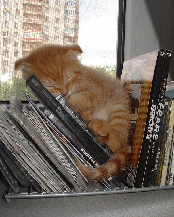 gattini-addormentati-ovunque-15