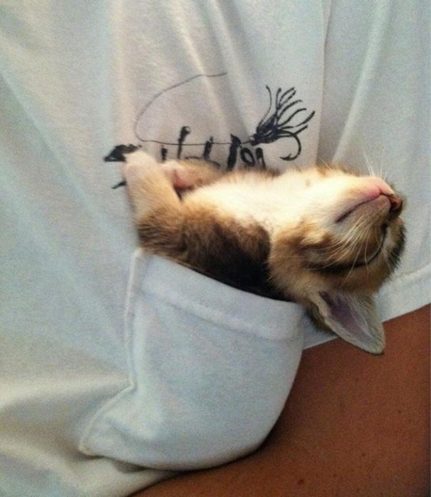 gattini-addormentati-ovunque-17