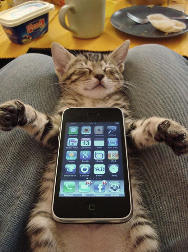 gattini-addormentati-ovunque-19