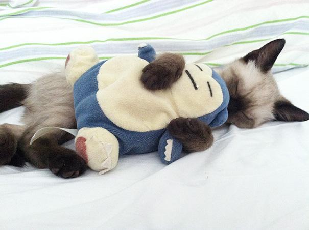 gattini-addormentati-ovunque-21