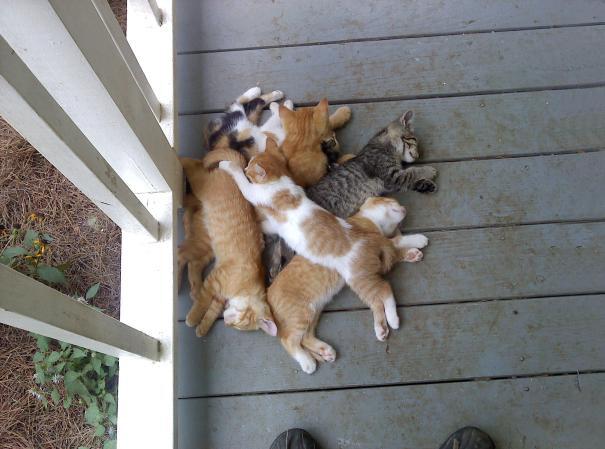 gattini-addormentati-ovunque-27