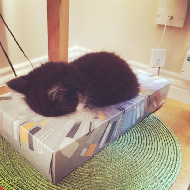 gattini-addormentati-ovunque-28