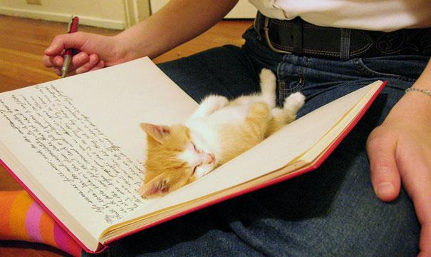 gattini-addormentati-ovunque-31