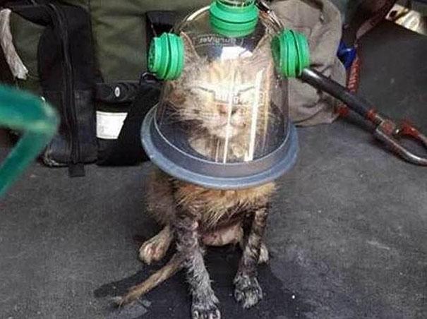gatto-salvato-maschera-ossigeno-vigili-del-fuoco-1