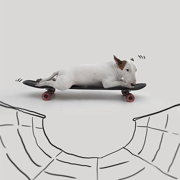 illustrazioni-divertenti-interattive-cane-jimmy-choo-rafael-mantesso-01