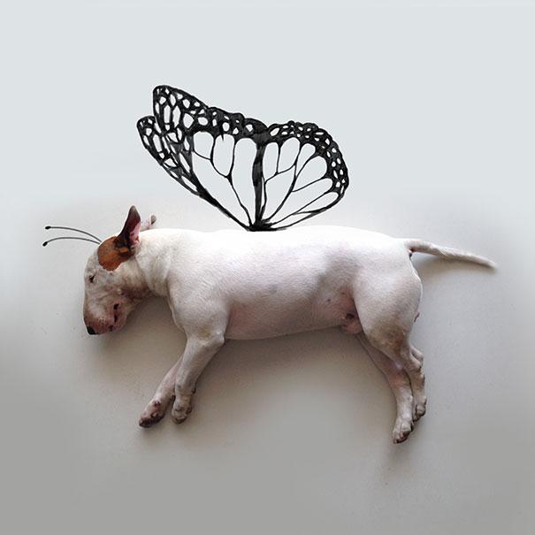 illustrazioni-divertenti-interattive-cane-jimmy-choo-rafael-mantesso-07