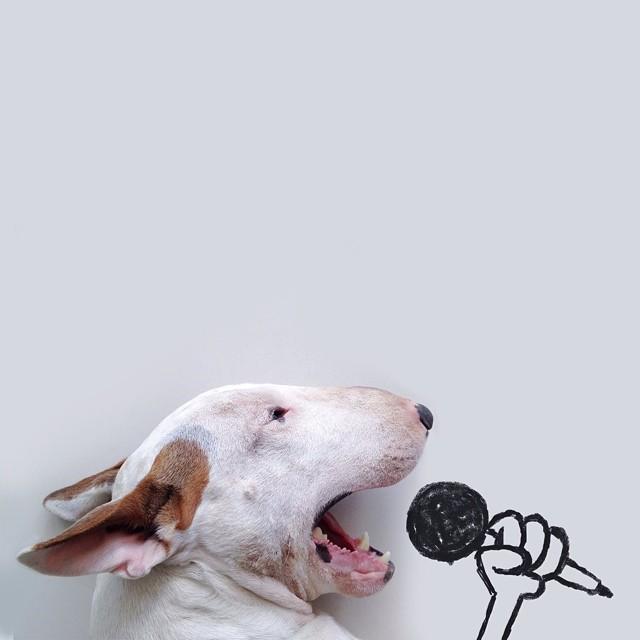 illustrazioni-divertenti-interattive-cane-jimmy-choo-rafael-mantesso-11