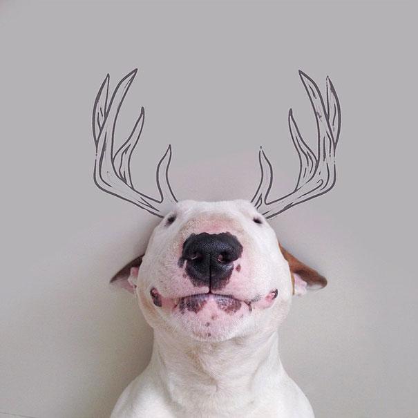 illustrazioni-divertenti-interattive-cane-jimmy-choo-rafael-mantesso-18