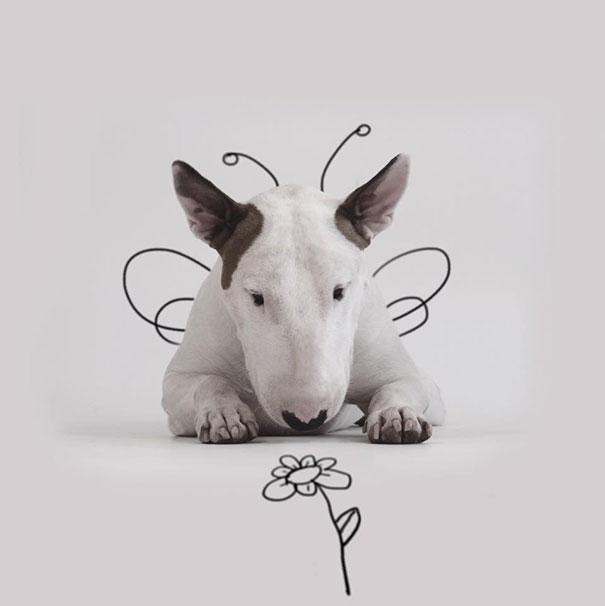 illustrazioni-divertenti-interattive-cane-jimmy-choo-rafael-mantesso-20