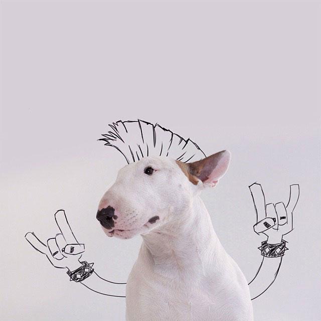 illustrazioni-divertenti-interattive-cane-jimmy-choo-rafael-mantesso-21
