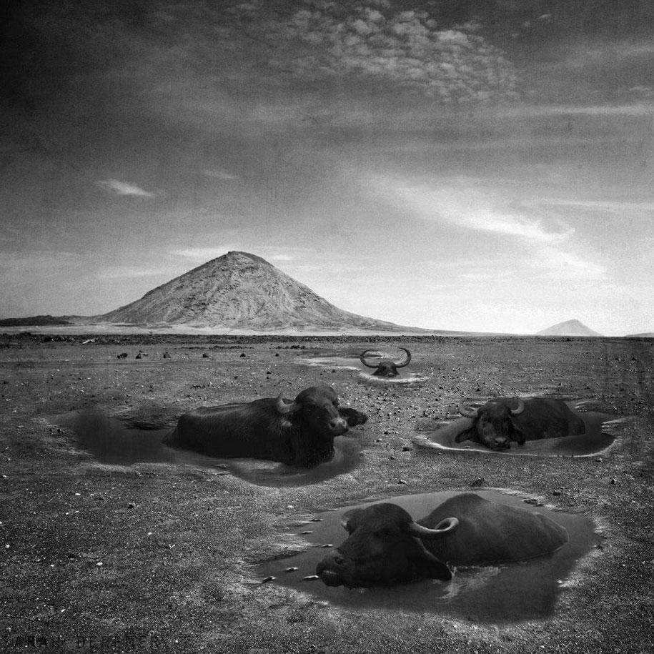 immagini-fotografia-surreale-bianco-e-nero-animali-ibridi-sarah-deremer-02