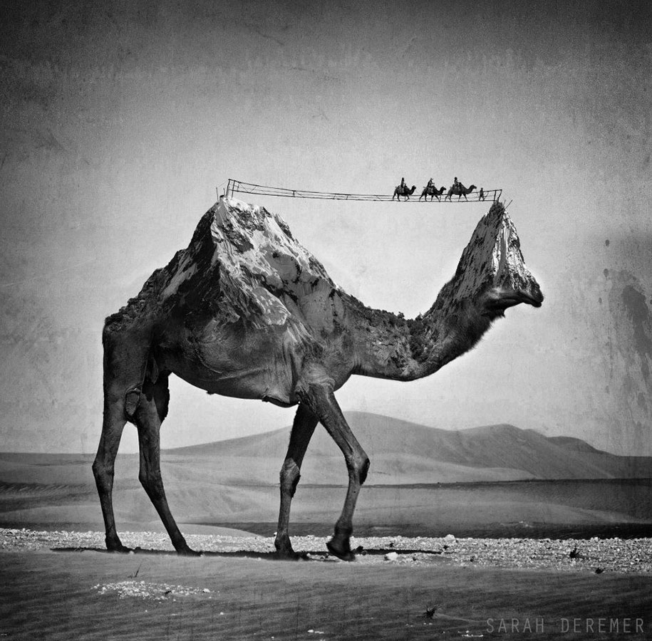 immagini-fotografia-surreale-bianco-e-nero-animali-ibridi-sarah-deremer-03